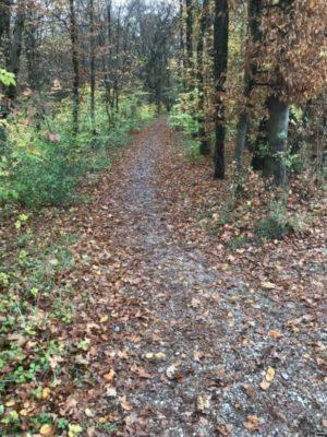 Weg im Kreuzlinger Forst