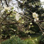 Erste Blüten im März
